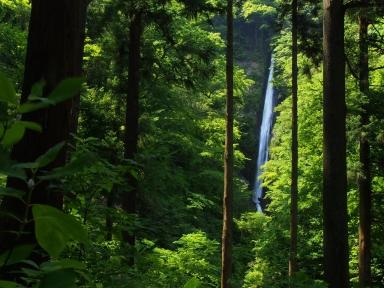 神奈川県山北町 洒水の滝