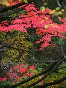 大芦渓谷 紅葉 2016