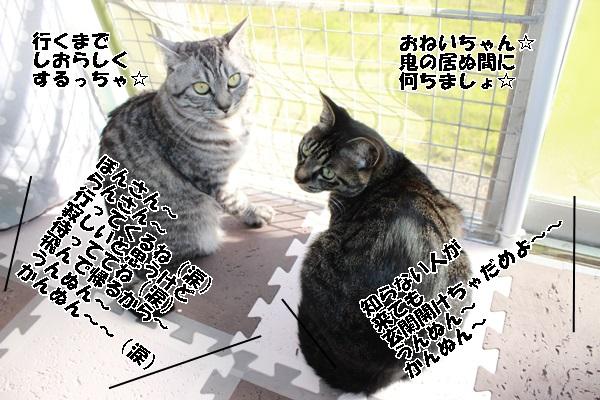 IMG_0572.jpg