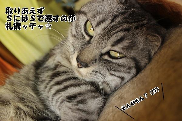 IMG_0877.jpg