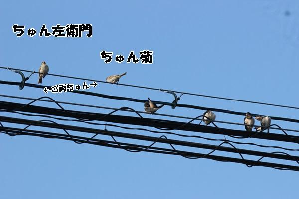IMG_1225.jpg