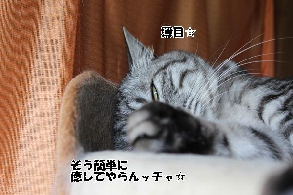 IMG_1264.jpg