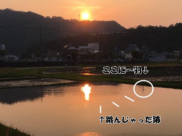 IMG_1427_20160612150734cb0.jpg