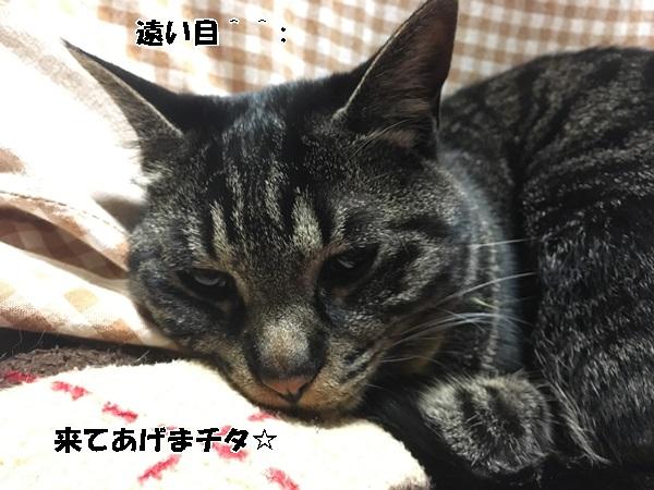 IMG_1486.jpg