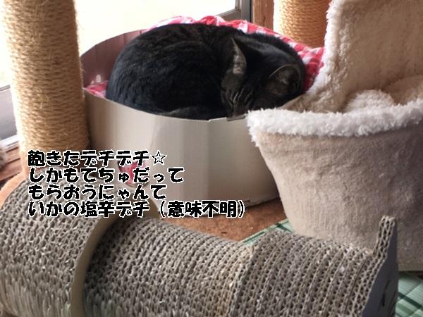 IMG_1493.jpg