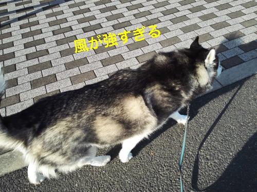 IMG_20160417_162719_Fotor.jpg