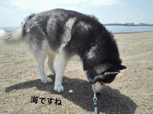 IMG_20160419_114710_Fotor.jpg