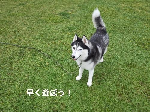 IMG_20160423_071834_Fotor.jpg