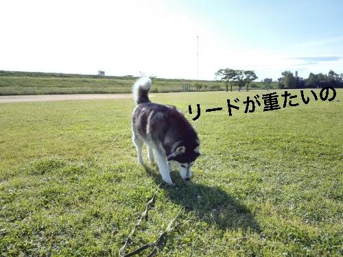 IMG_20160507_071753_Fotor.jpg
