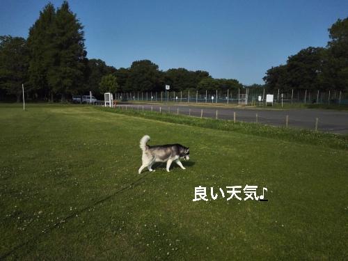 IMG_20160521_072031_Fotor.jpg