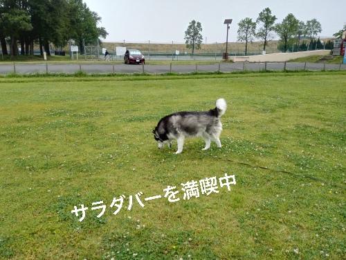IMG_20160528_073031_Fotor.jpg