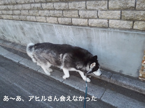 IMG_20160605_164027_Fotor.jpg