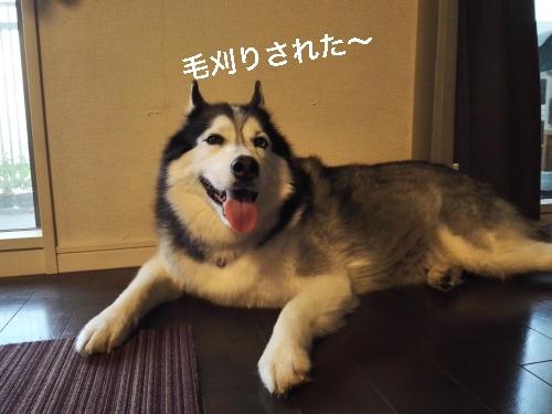 IMG_20160612_173342_Fotor.jpg