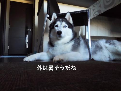 IMG_20160807_165134_Fotor.jpg