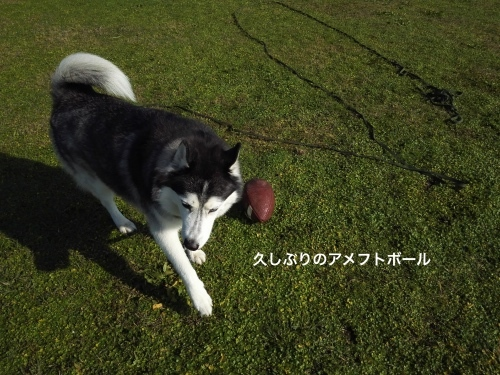 IMG_20161113_093410_Fotor.jpg