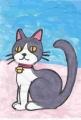 4猫ハチワレ (2)