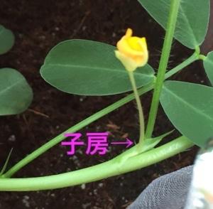 fc2blog_20160803174804084.jpg