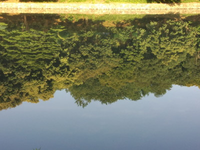 三ツ池新緑