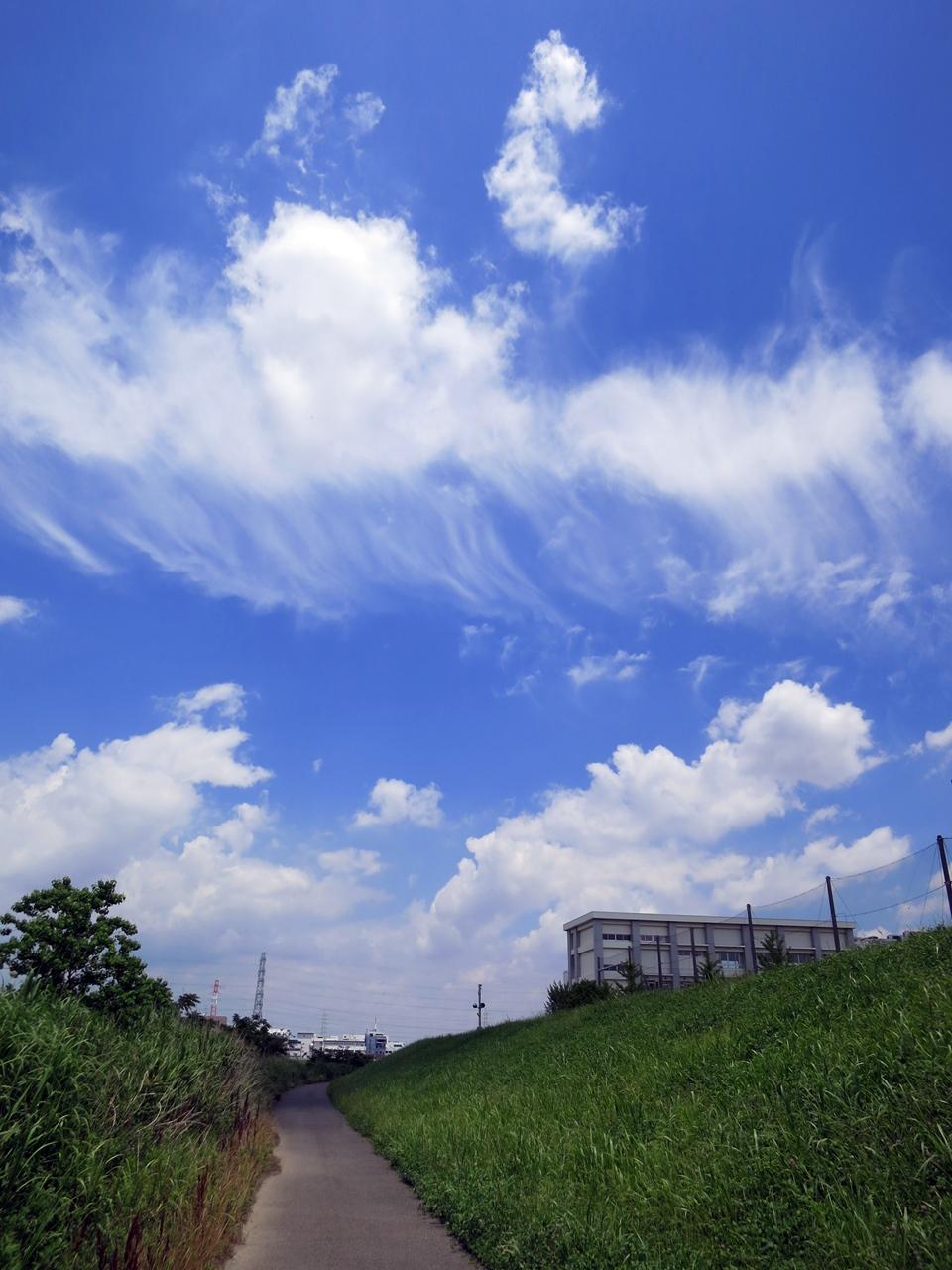 160611梅雨の中休み-02