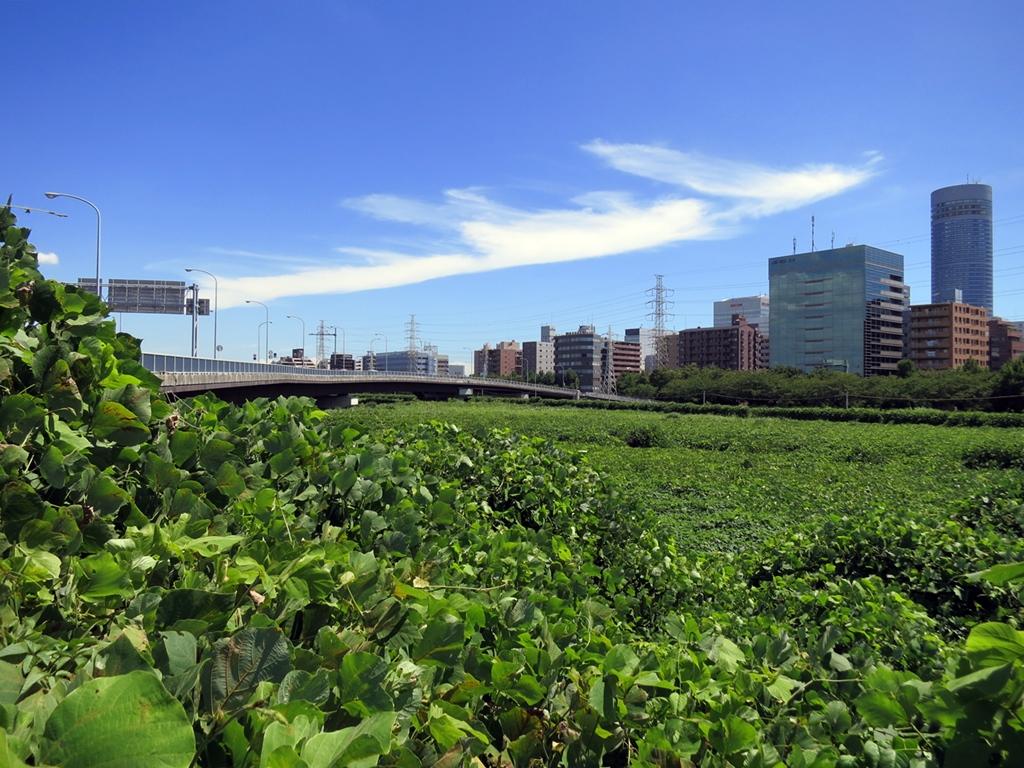 160827新横浜溝の口-03