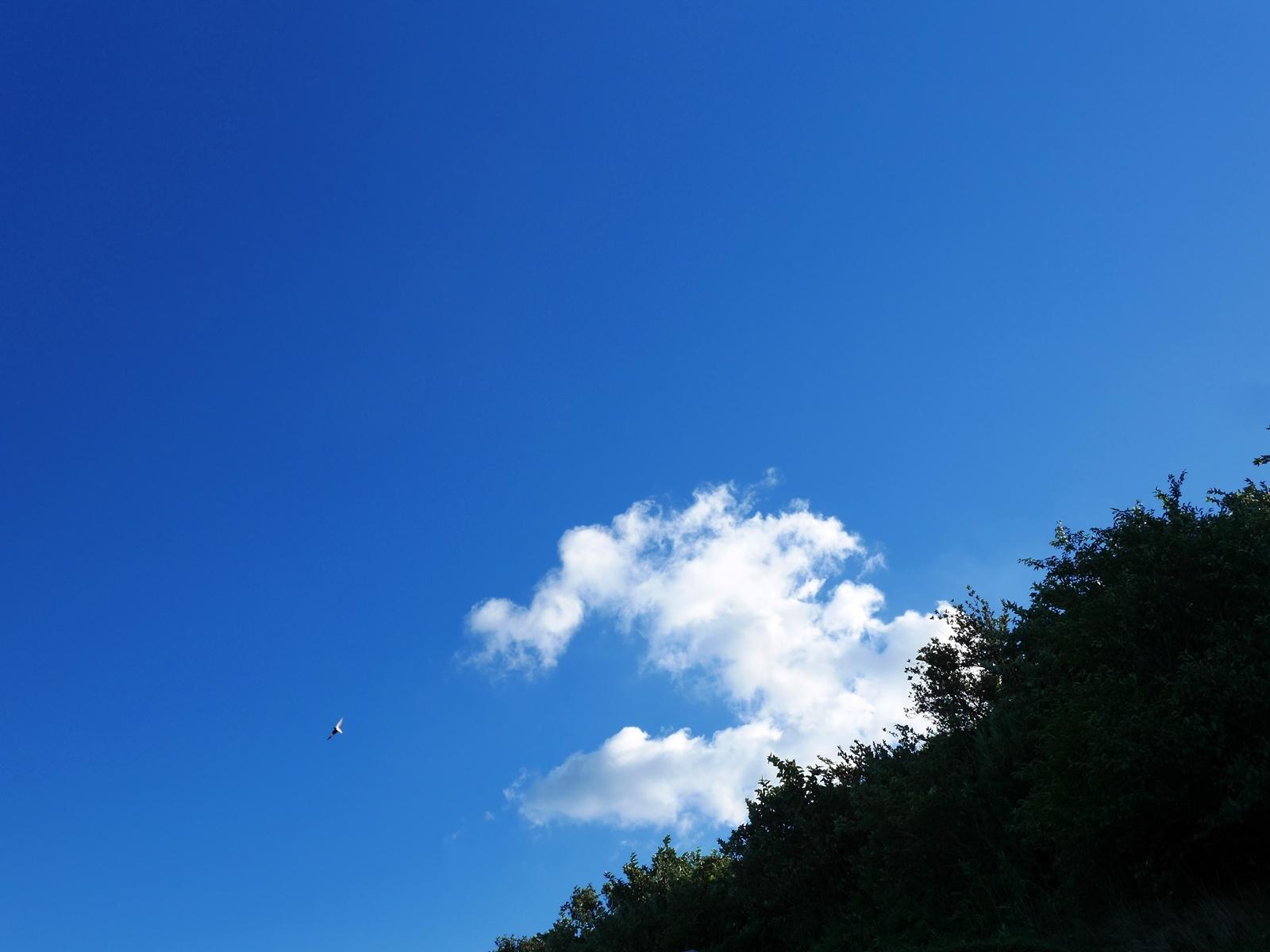 160819伊豆山お墓-05