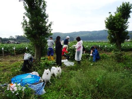 2016 枝豆収穫ツアー1