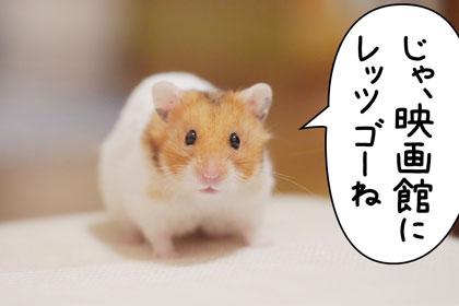 めめちゃん3