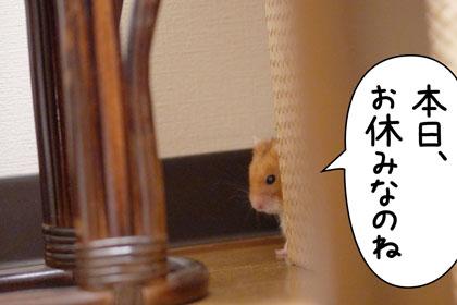 武藤さん1
