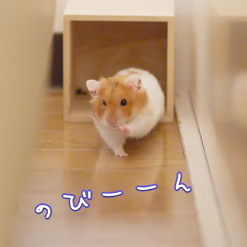 シン・かめさん1