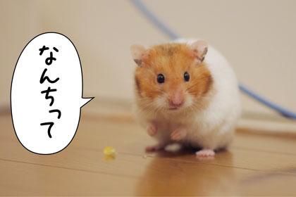 ぴょーん2
