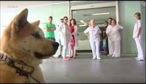 20160930スペインの忠犬ハチ公
