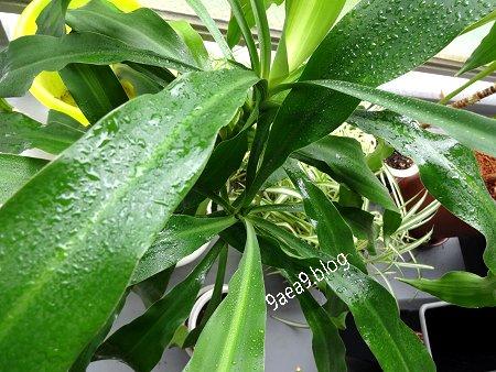 6-11 観葉植物