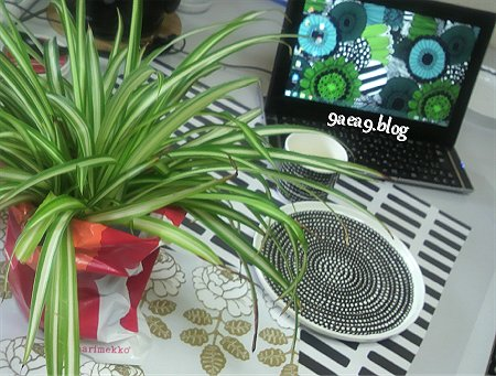 観葉植物marimekko