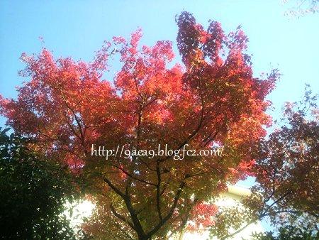 紅葉 昨年