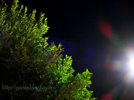 光と影のトライアングル 夜編 1