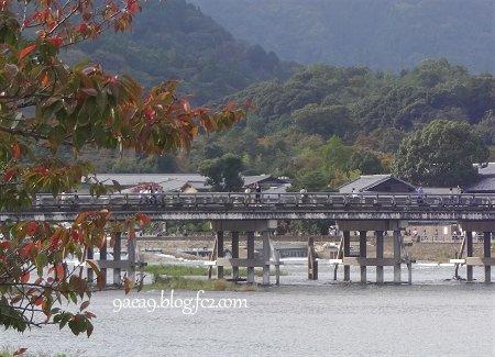 2016 10月20日 今日の京都嵐山 5