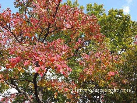 2016-11-11 9aea9 blog fc2 com 紅葉写真 普通編 2