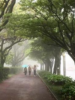 キャンパス内霧で全くもってみえませんw