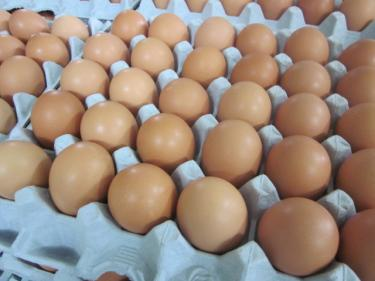外国で卵を食べるのは・・?
