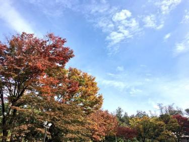 日に日に秋深まる。