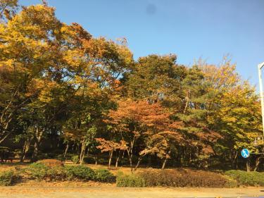 ソウルの秋深まる!