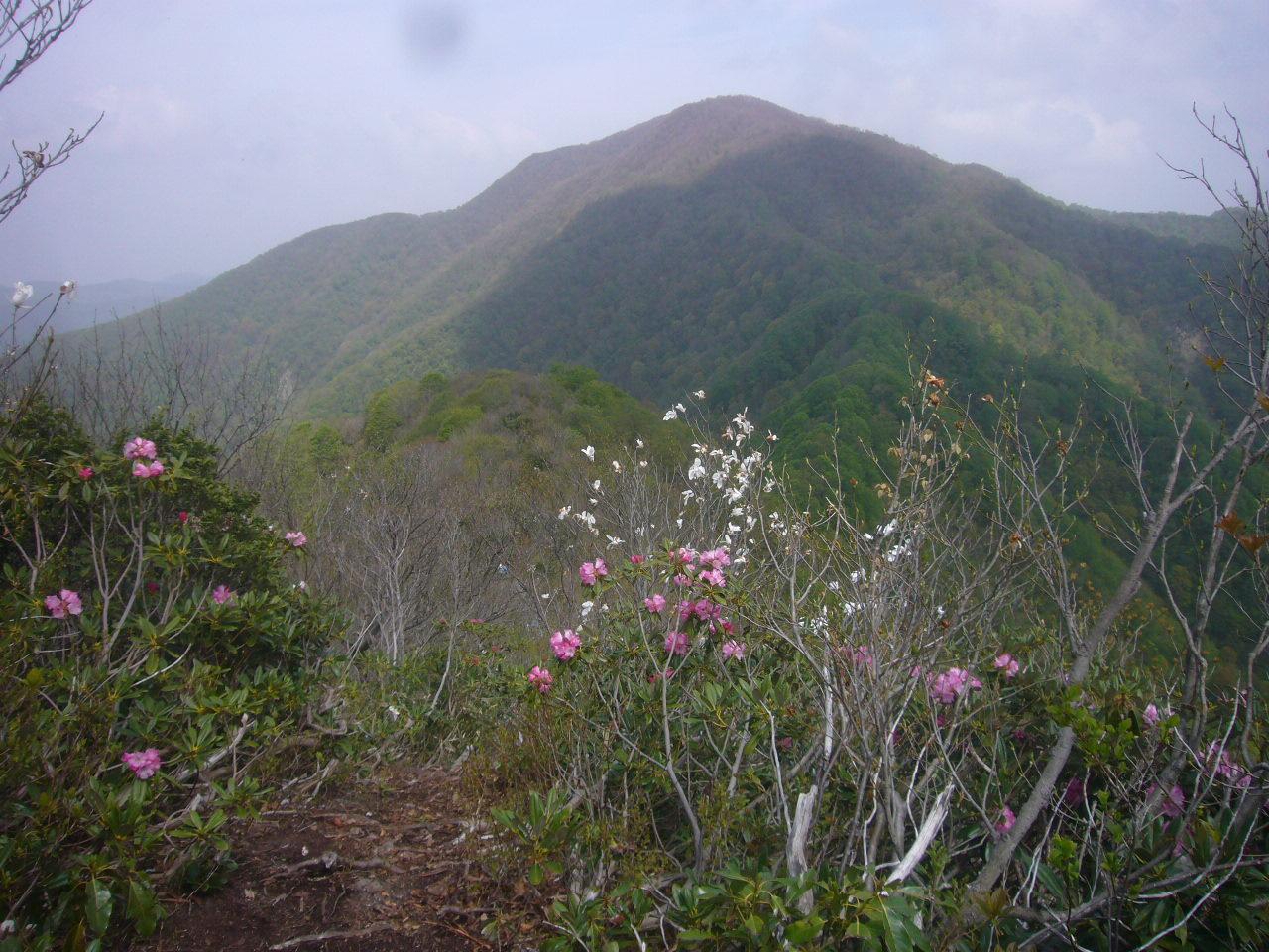 小倉山下りから富士写が岳 H28.4.24