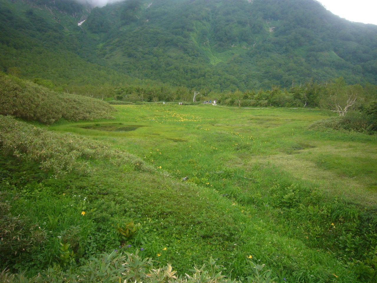 栂池湿原地帯 浮島付近 H28.7.19