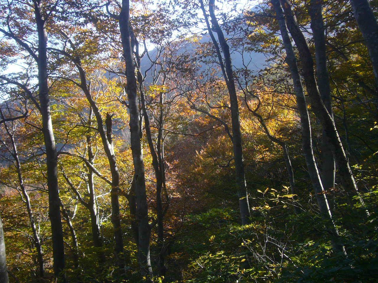 我谷コース登り H28.11.05