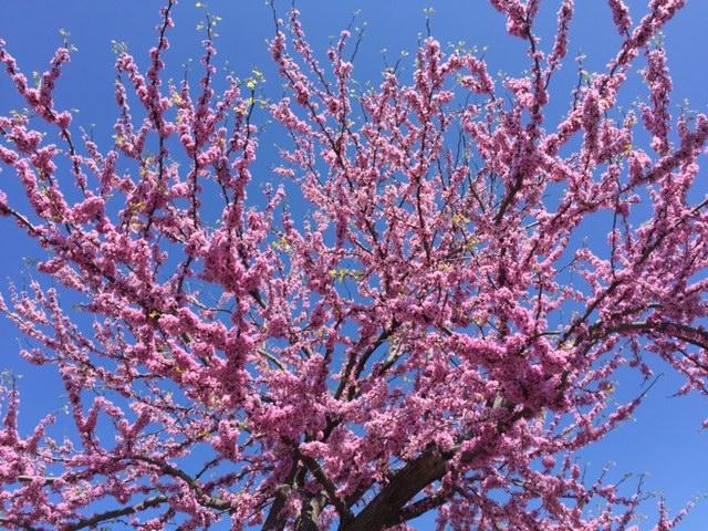 pinkflowerApril2016.jpg