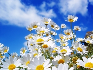 Beautiful-Daisy-Flower-Picture-2.jpg