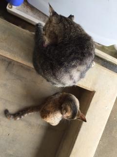 兄弟猫 2