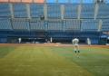 練習する阪神の選手