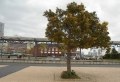 木の向こうがプラットホーム