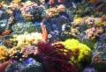 サンゴやフジツボ